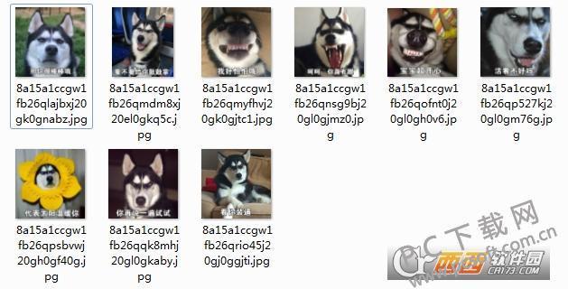 哈士奇搞笑图片表情包