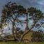 微软官网最新新西兰风景windows8系统主题官方版